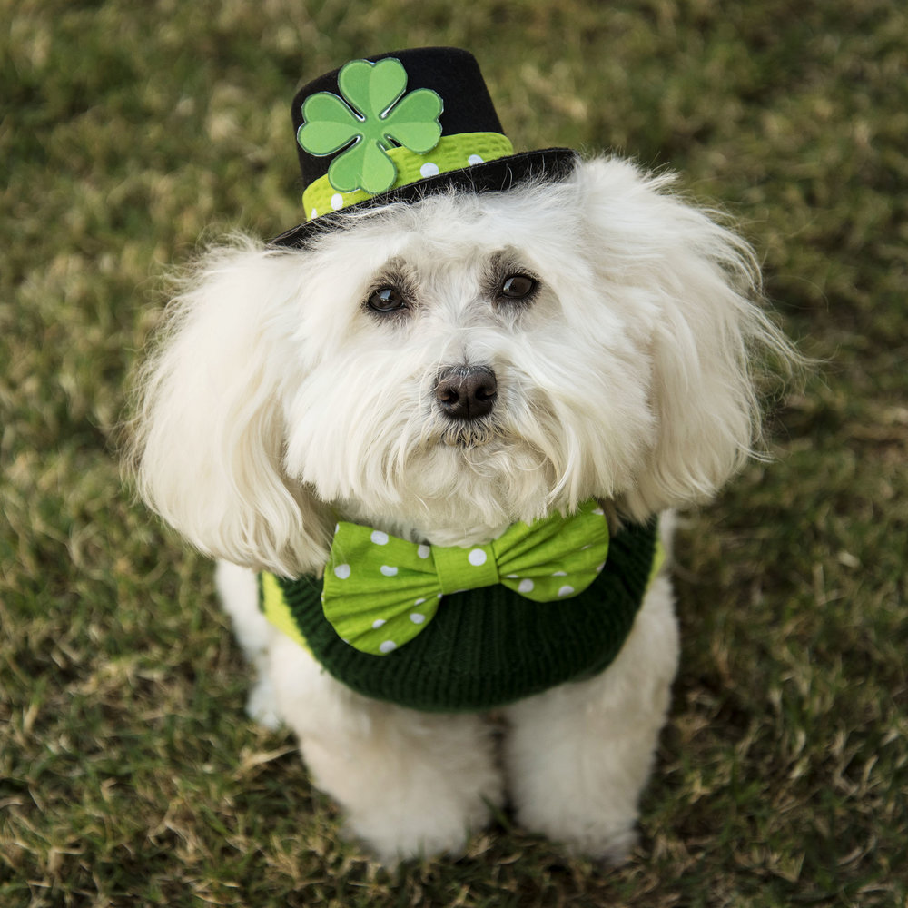 Are you feeling lucky today? Well, you should! Mom only had one St Patty's day outfit…so instead of a group photo, you will be receiving individual St Patty's Day photos and greetings from each of us! See, it's your lucky day!!