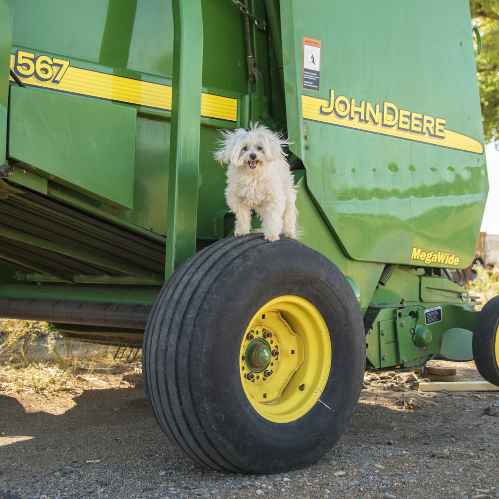 There was a break between the morning runs and the afternoon runs, so we did some extra exploring. Pebbles was practicing her model skills. What do you think, future John Deere model?