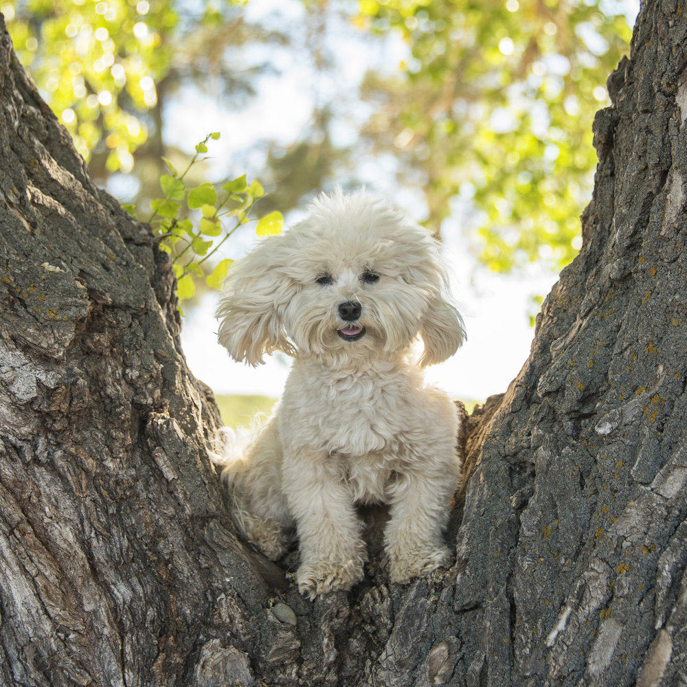 Bruiser found some really cool trees to climb!