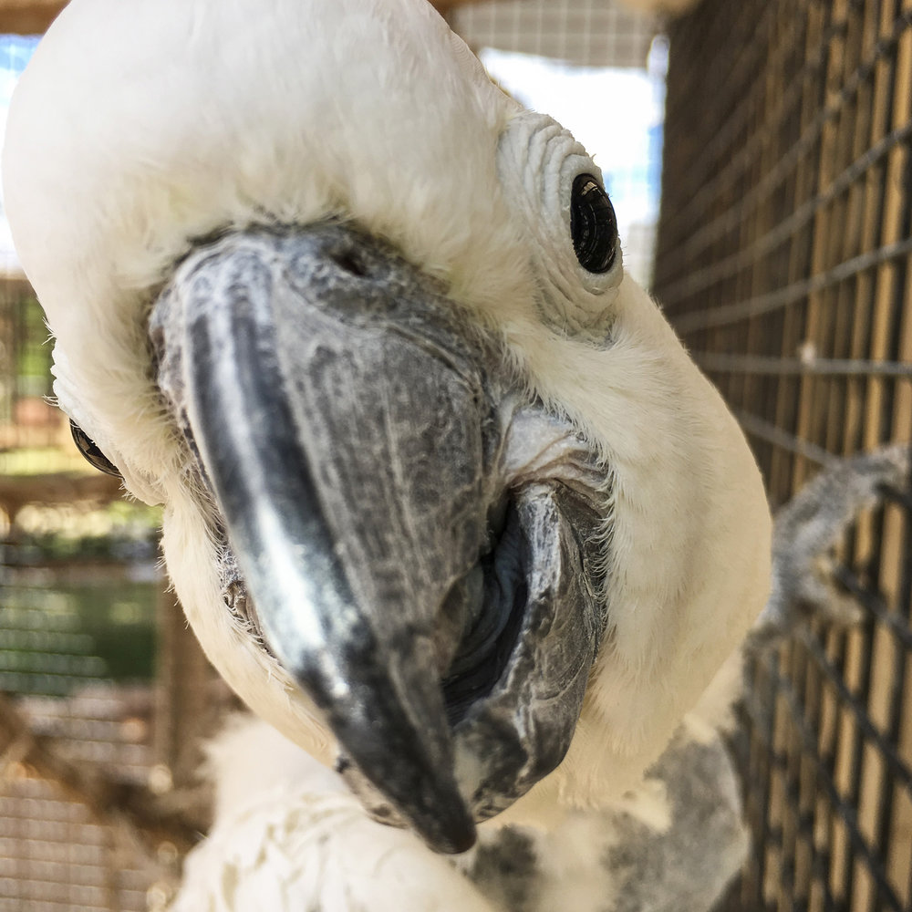 Parrot Garden's residents are both beautiful and talkative. Parrots need a lot of attention and mental stimulation, and many species can live a very long time. So a parrot is a real commitment! But there's nothing these colorful creatures want more than a friend.