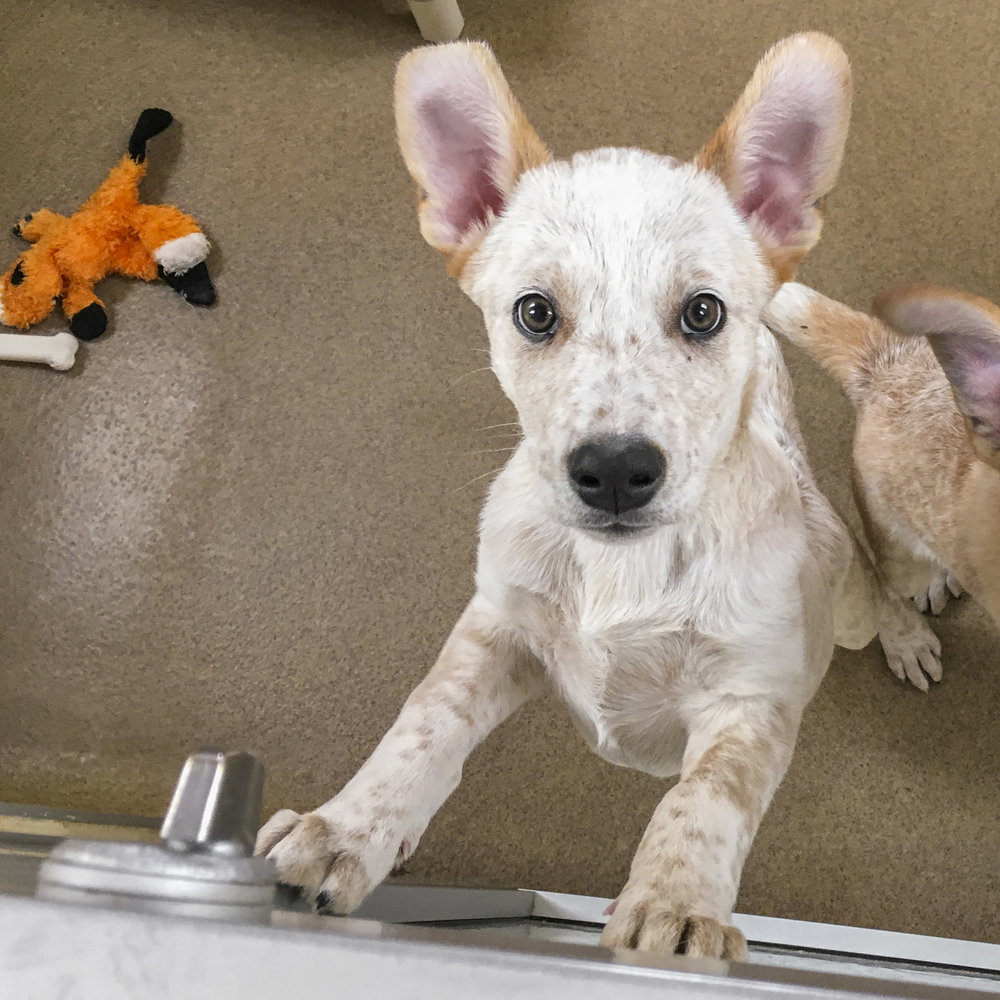 It's a darn good thing, Olaf already has a pending adoption…as soon as the kid's been neutered…because boy does he know how to work those puppy eyes!