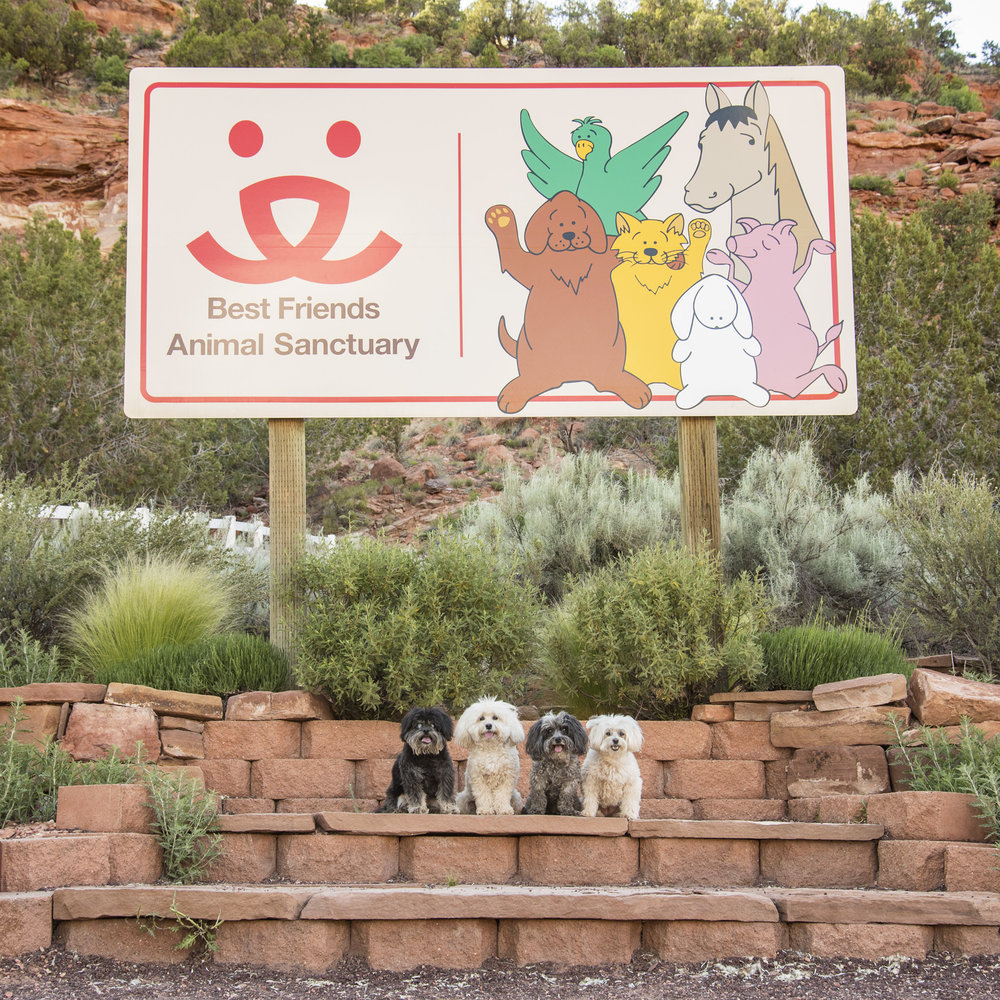 If you're ever in Southern Utah, and have the chance, we highly recommend spending a day (or more) at Best Friends Animal Sanctuary. Even if you can't volunteer, at least stop by and take a tour! They are an amazing organization, dedicated and committed to making the country No Kill by 2025. Wouldn't that be an amazing world to live in? If we all work together, anything is possible!