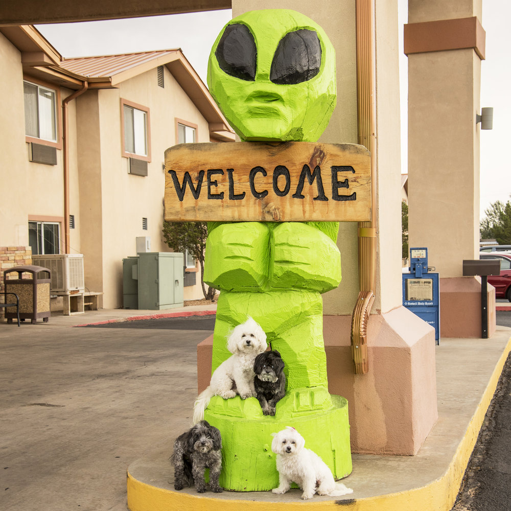 Nothing like being welcomed by the locals in Roswell, NM!
