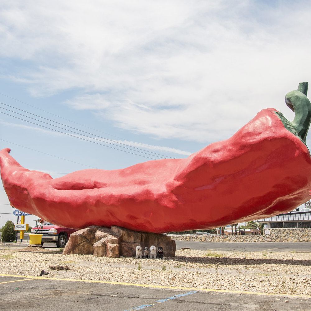 When Road Tripping across the desert Southwest, what better place to take shelter from the heat of the sun, then under the Big Chile!