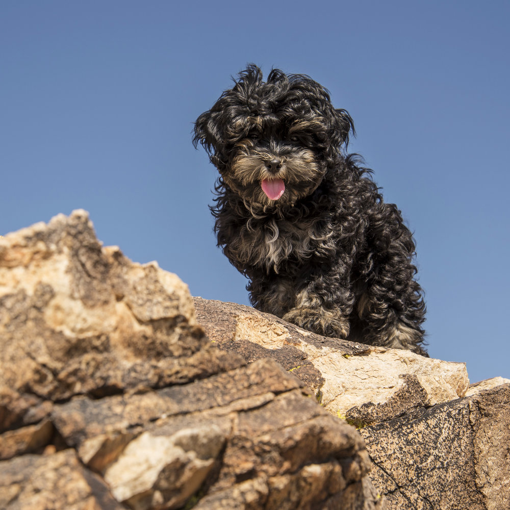 My first rock climbing adventure…I may have little legs, but I'm one brave pup!