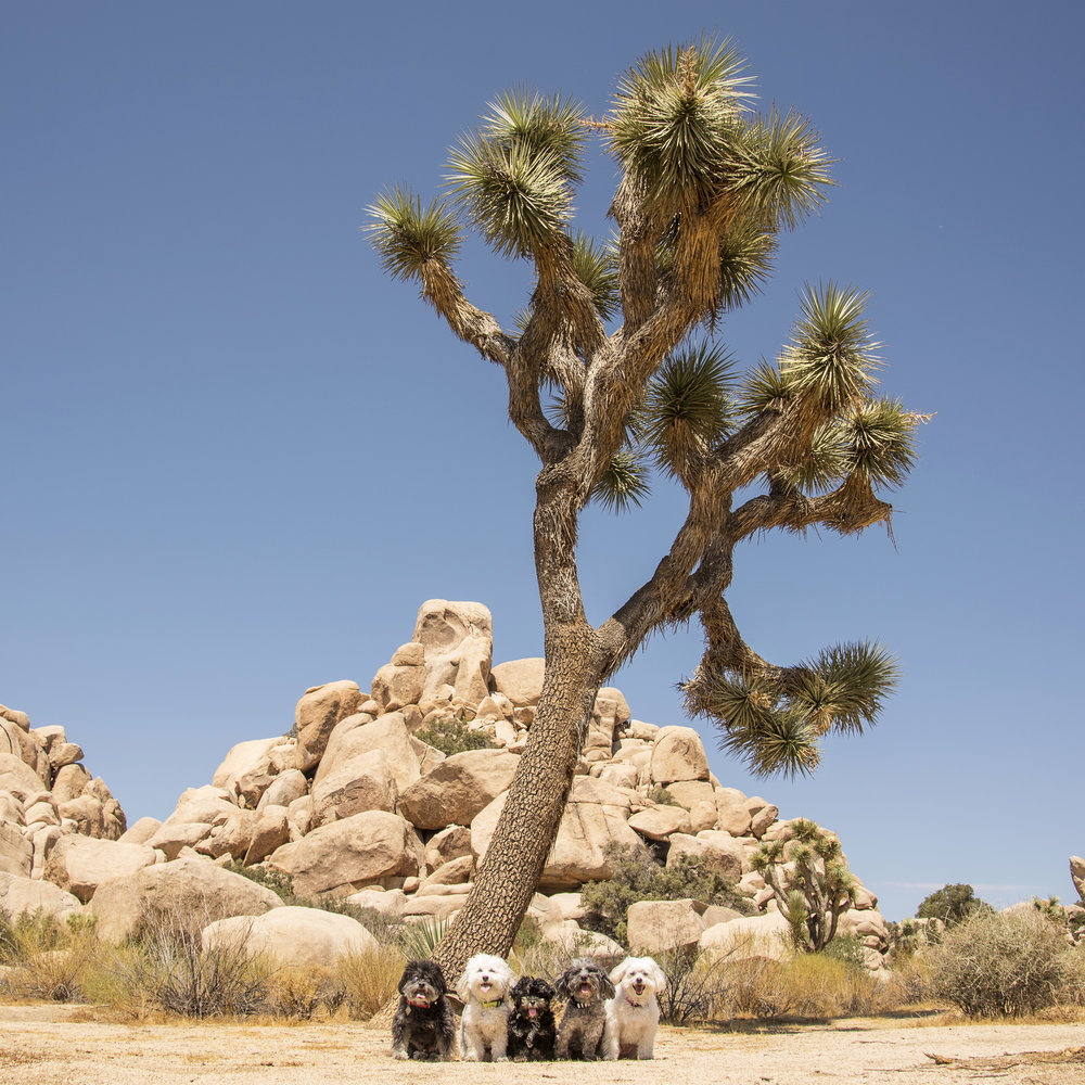 Yep, Joshua Tree National Park is beautiful, but we've seen enough and we're hot…let's get to the beach!