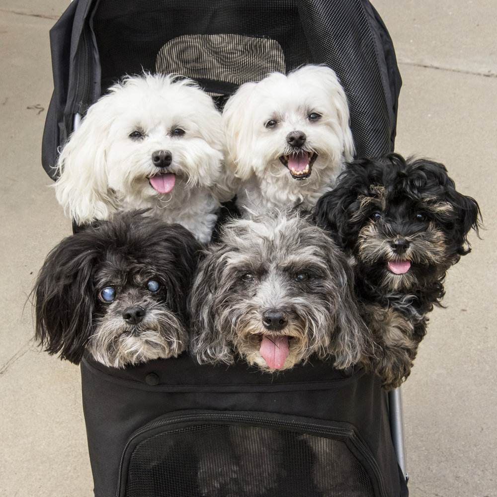 We're not sure…when it's unseasonably hot, is it better to walk or be squished in the stroller all together?!?