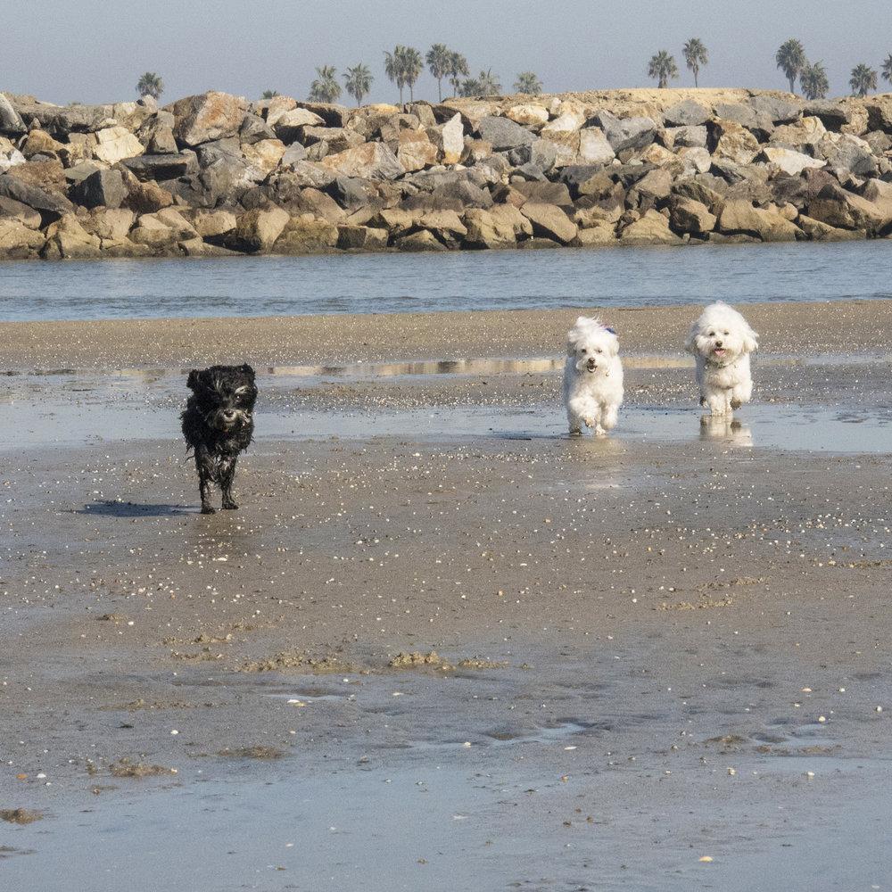 Ocean Beach Dog Beach…we have arrived!!