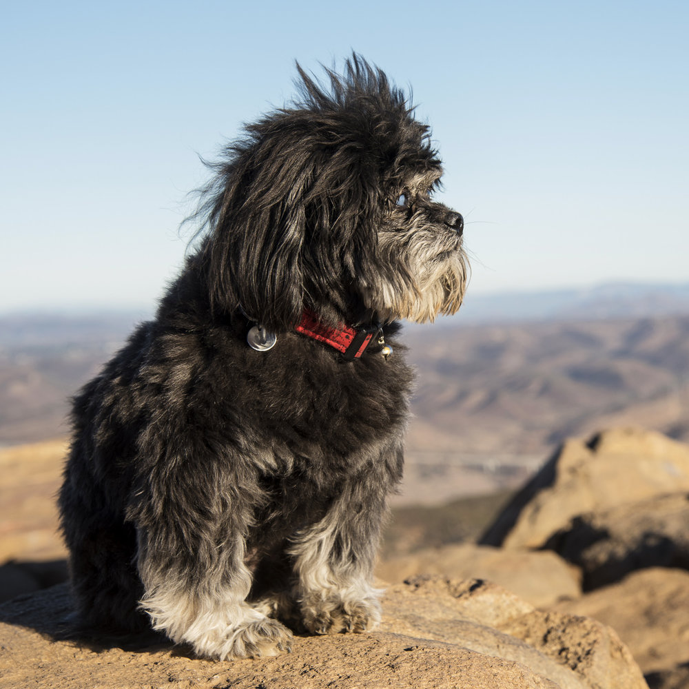 There is nothing more serene than Master Yogi Benji on the top of Cowles Mountain.