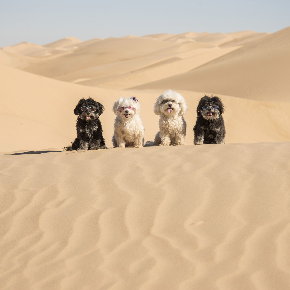 We had so much fun at the Sand Dunes on our way out, that we had to stop on our way back.