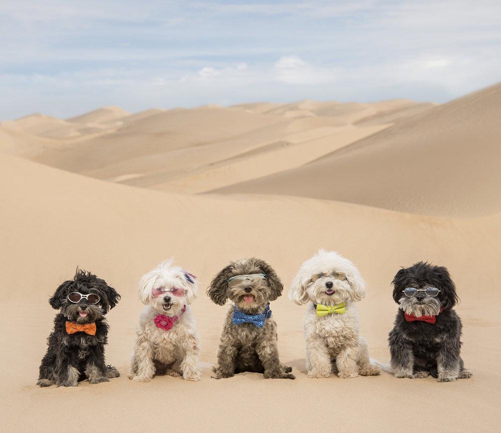 Jax , Pebbles ,  Joey ,  Bruiser  &  Benji