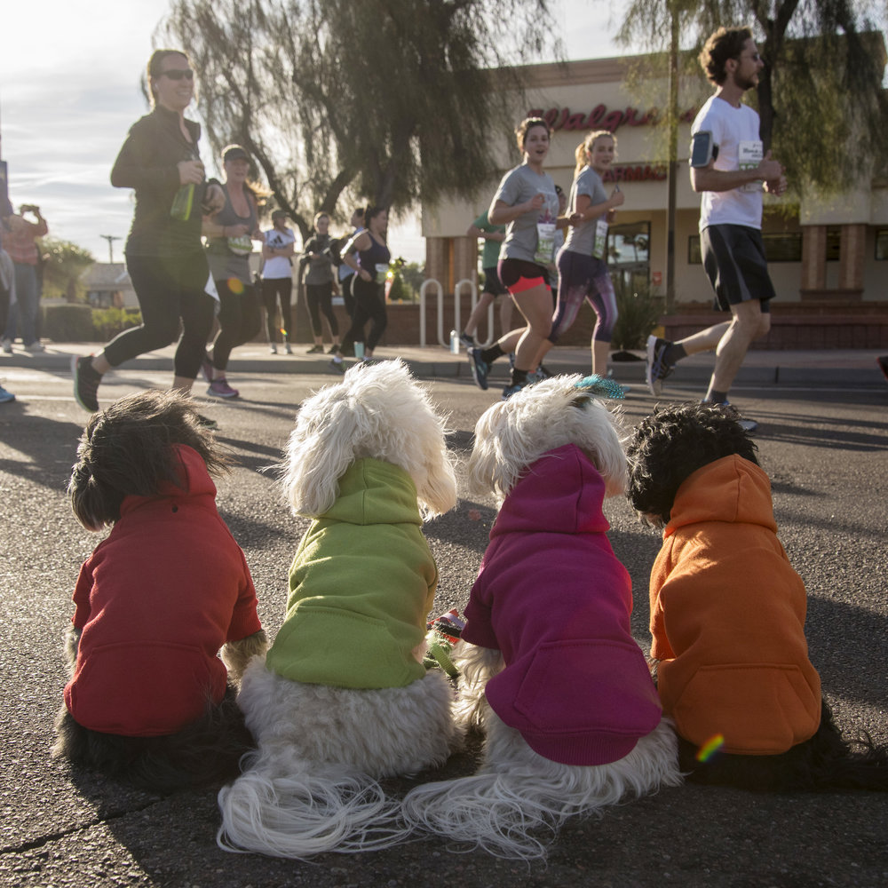 They came into town to run in the Arizona Rock N Roll Half Marathon. Of course, the best cheering squad ever had to get up nice and early to cheer them on!