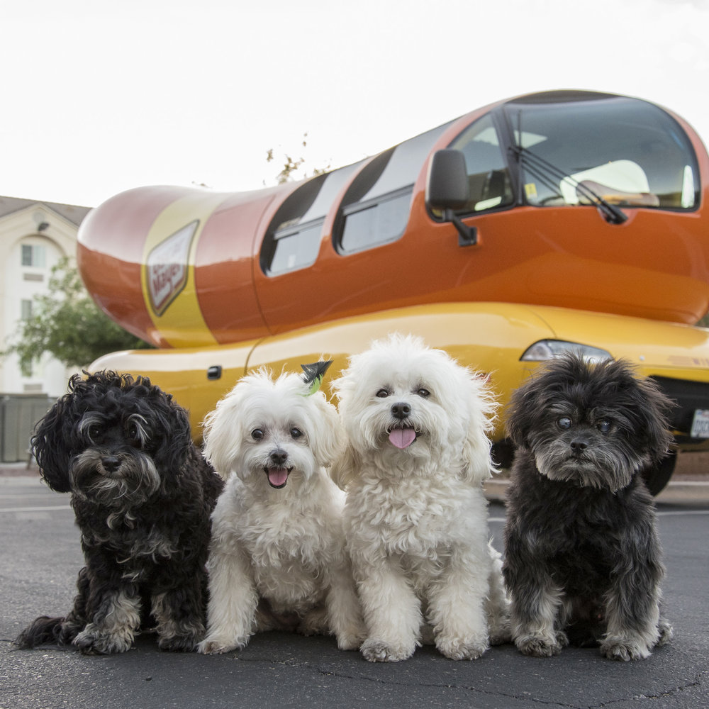 Guess what else we found…the  #Wienermobile !!
