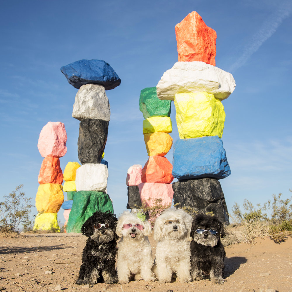 A splash of color in the middle of the desert… #SevenMagicMountains !