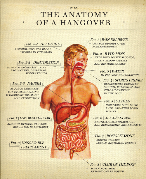 Drunk Anatomy