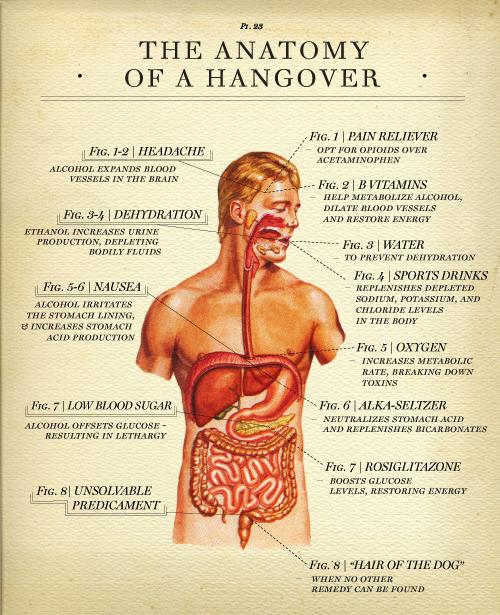 Drunk Anatomy