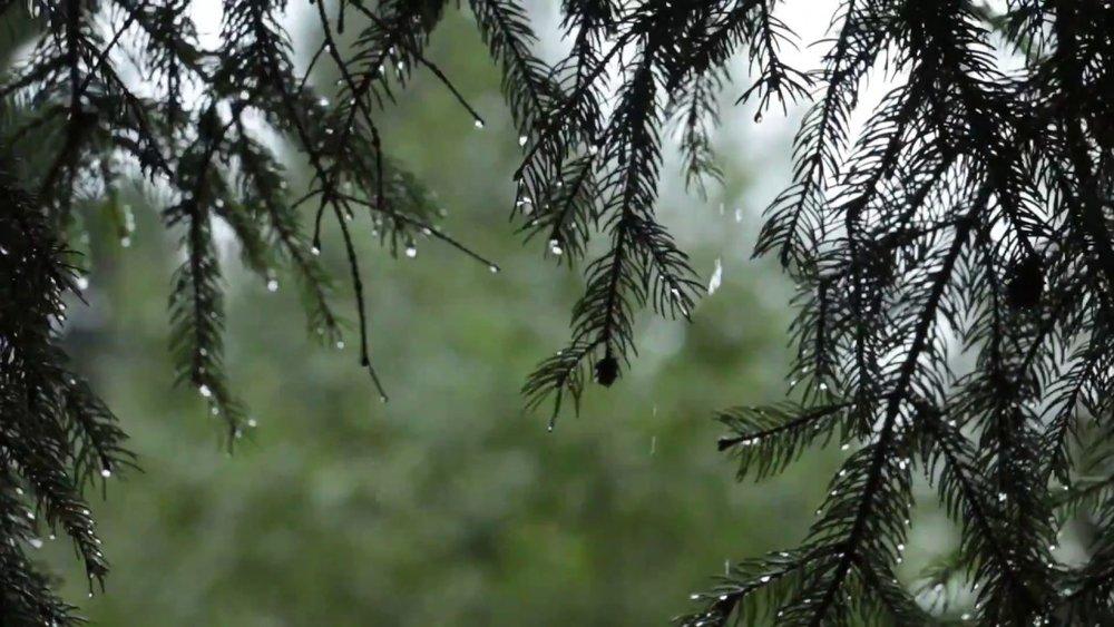 ForestRainDrops.jpg
