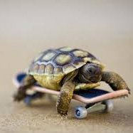 Unfortunately, this tortoise still lost the race.