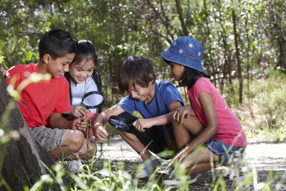 Junior Rangers Spring BioQuest - 23 Sept – 8 Oct 2017Challenge yourself, your friends and the local rangers as you search for some of Victoria's magnificent plants, animals and even fungi!Explore the participating Victorian parks between 23rd September and 8th October, 2017. Complete any of the Junior Rangers 'park quests'for bonus gold, and a chance to win the 'Quest Hero' prize!