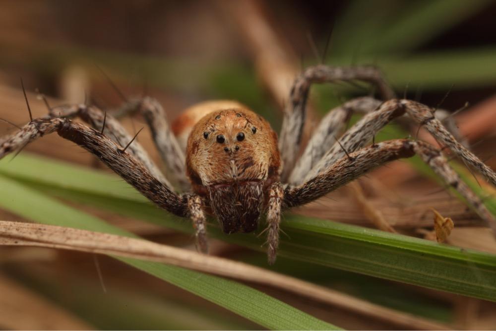 Image:  Lynx Spider by Mushroom God  , CC BY-NC