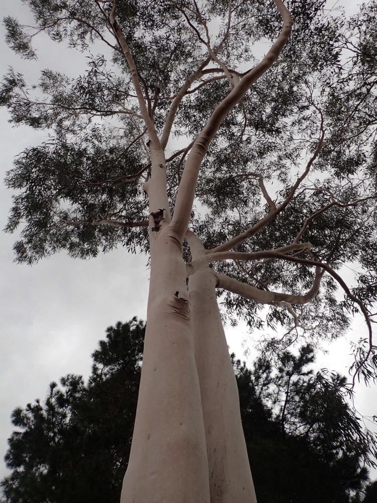 Turbo Tombo, NSW