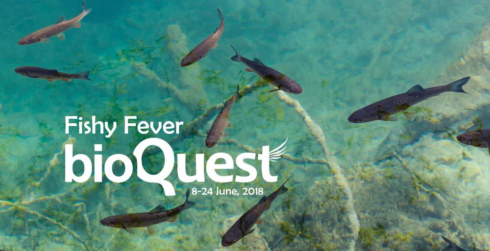 Fishy Fever main banner.jpg