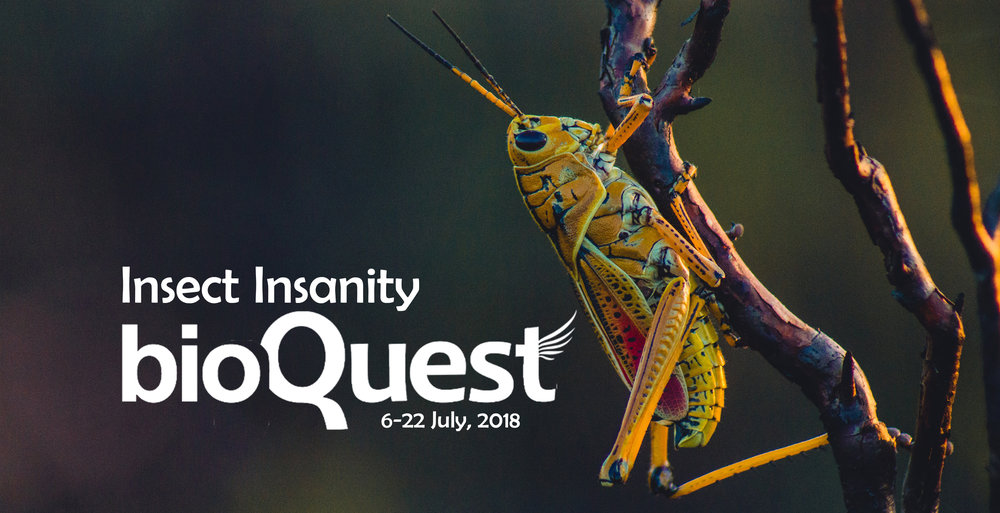 Insect Insanity main banner.jpg