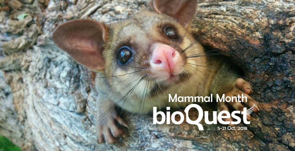 Mammal Month main banner.jpg