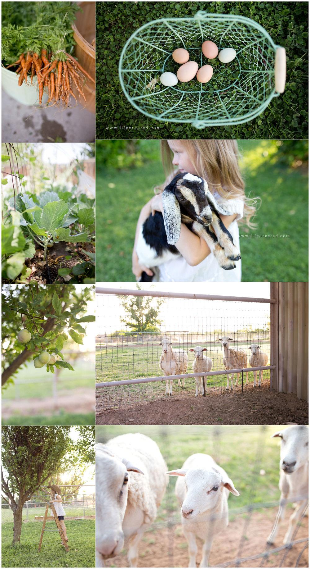 click pro, farm shoot
