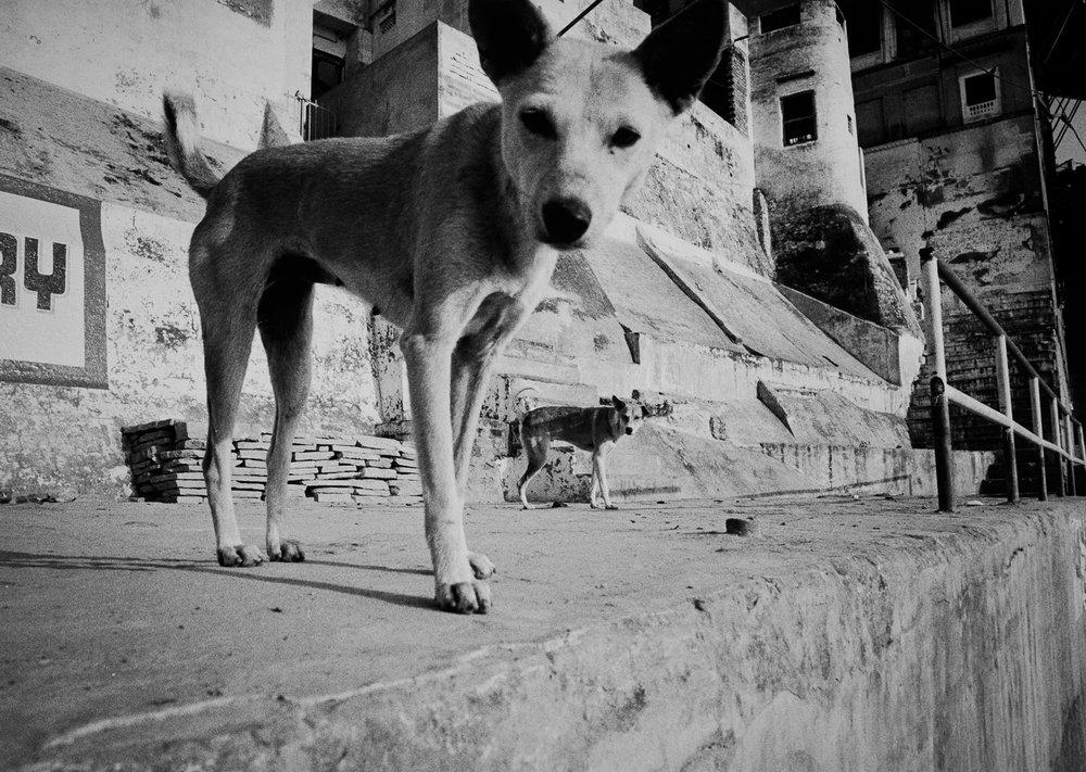 Varanasi-1343.jpg