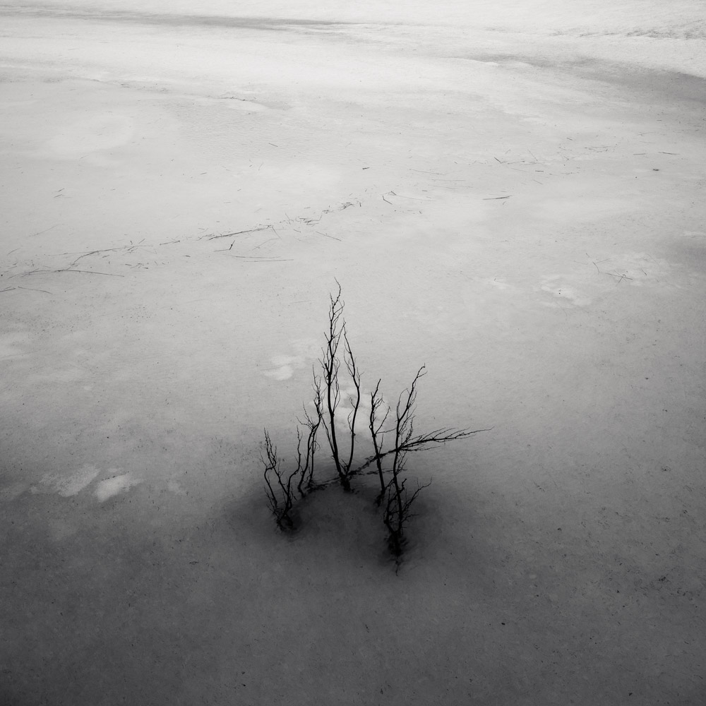 Frozen Pond II