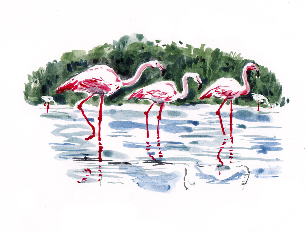 UEA flamingos