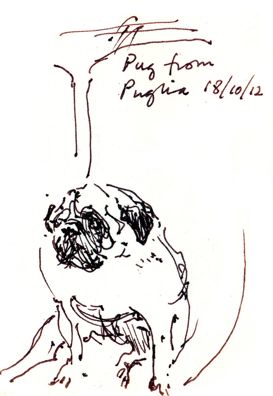 Pug from Puglia