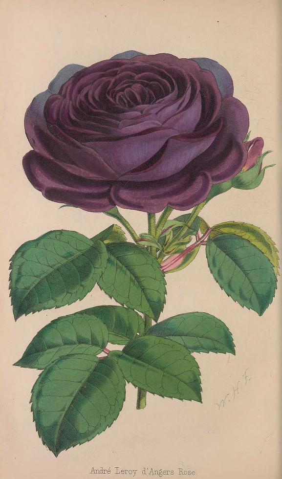 Floristpomologi1_0264.jpg