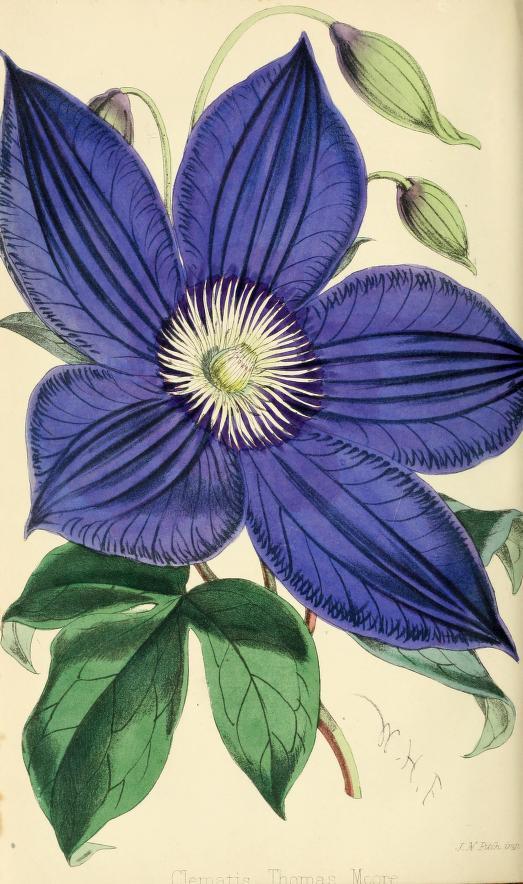 floristpomologis69lond_0320.jpg
