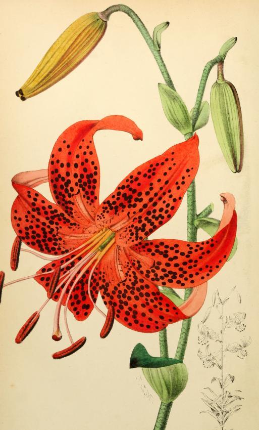floristpomologis73lond_0028.jpg