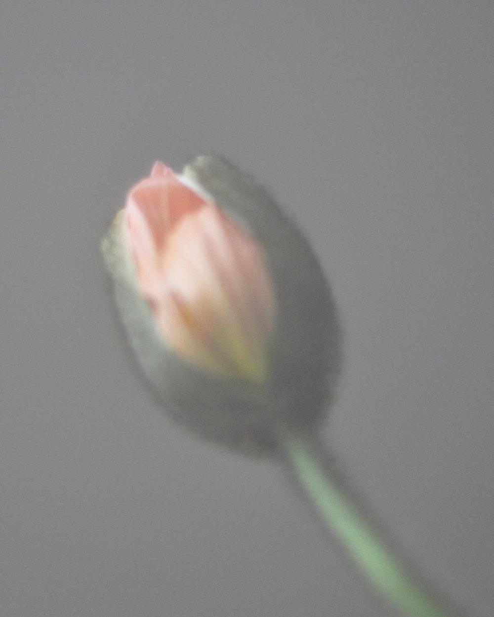poppypods2_1.jpg