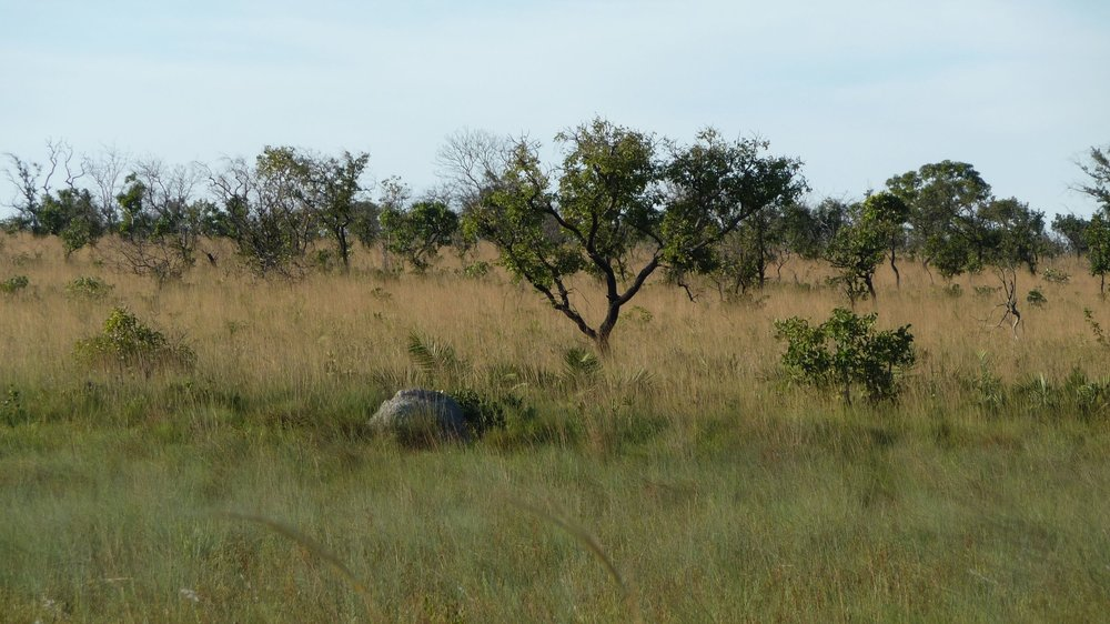 The Cerrado is the most biodiverse savannah in the world