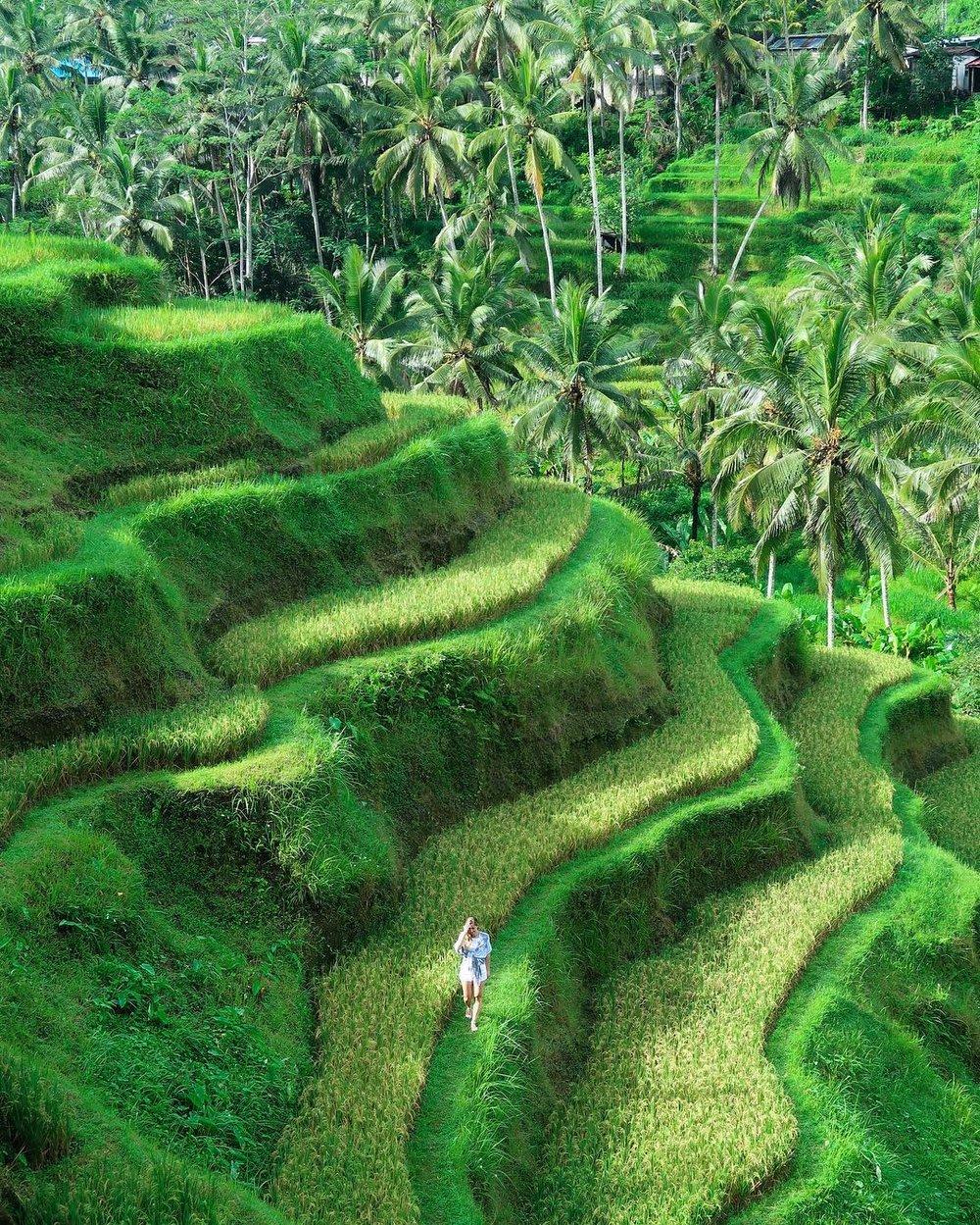 Tegallalang Rice Terrace - Ubud, Bali - Elise Darma