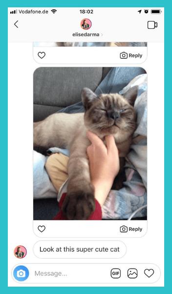 Cat photos + Elise = A happy Elise