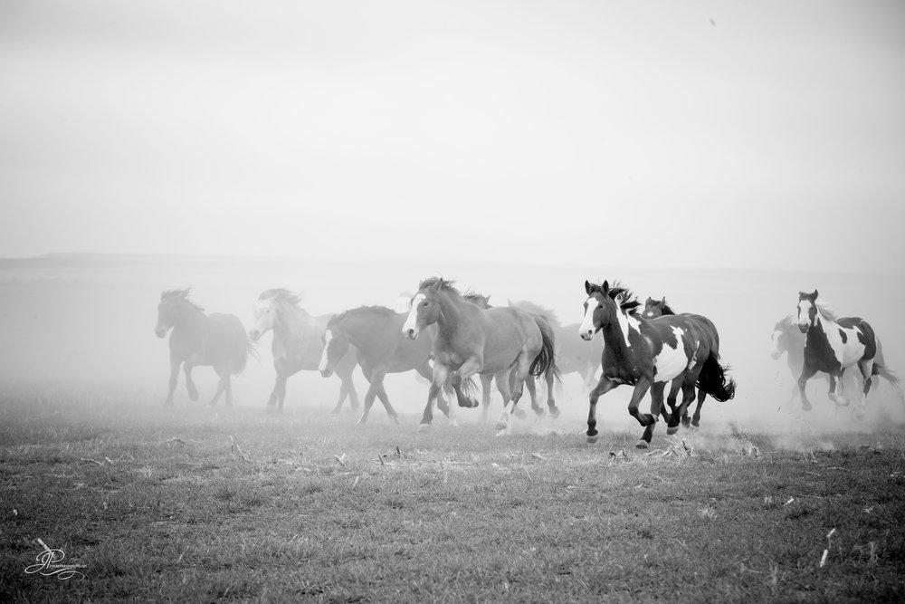 cervi chase-3164-3.jpg