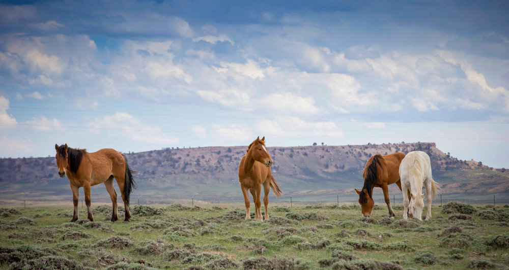 bucking horses web-1896-2.jpg