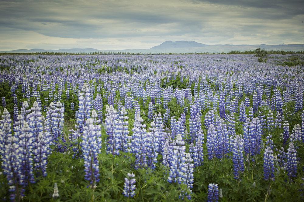 Iceland-184.jpg