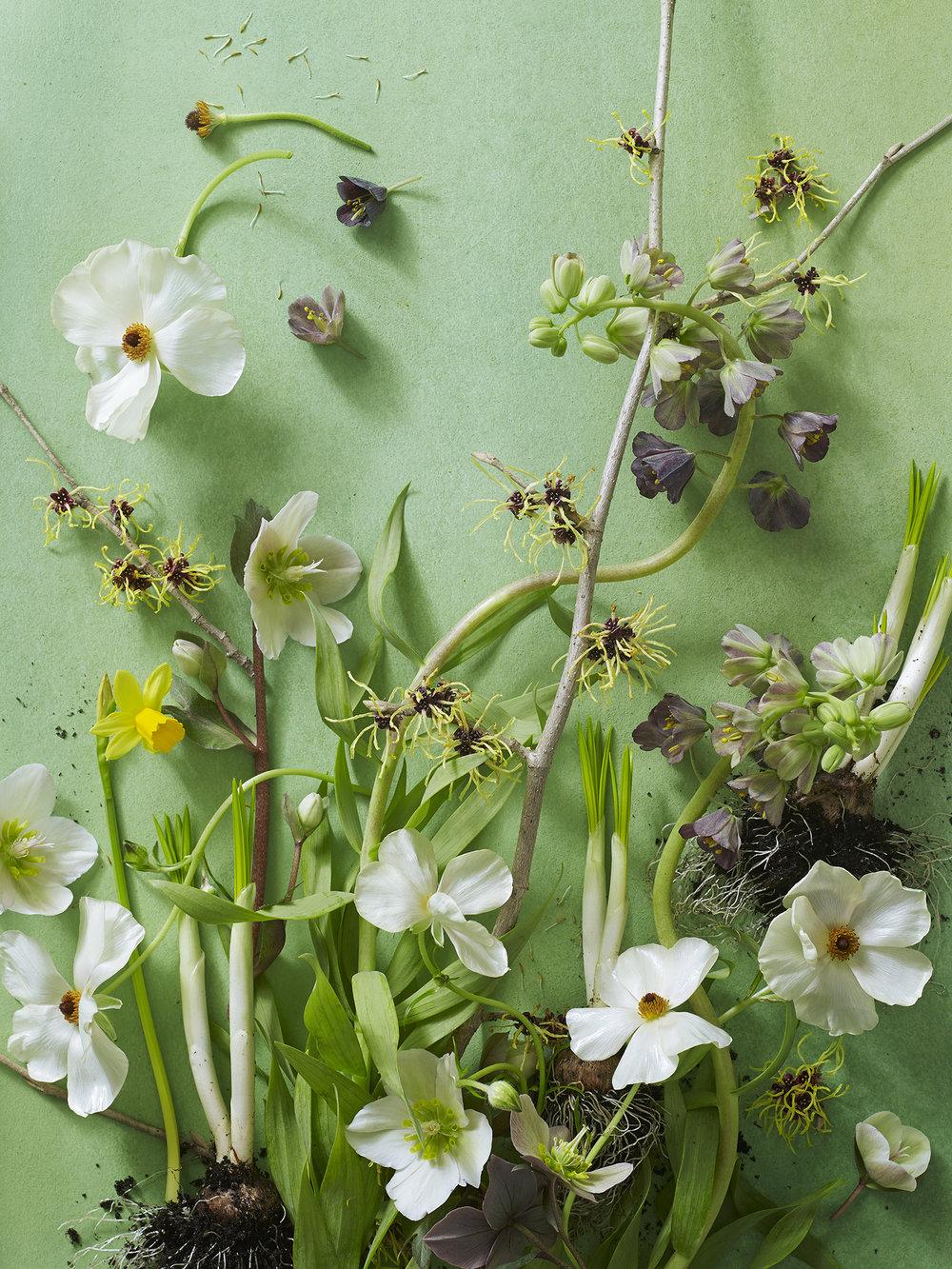 Spring_Green.jpg