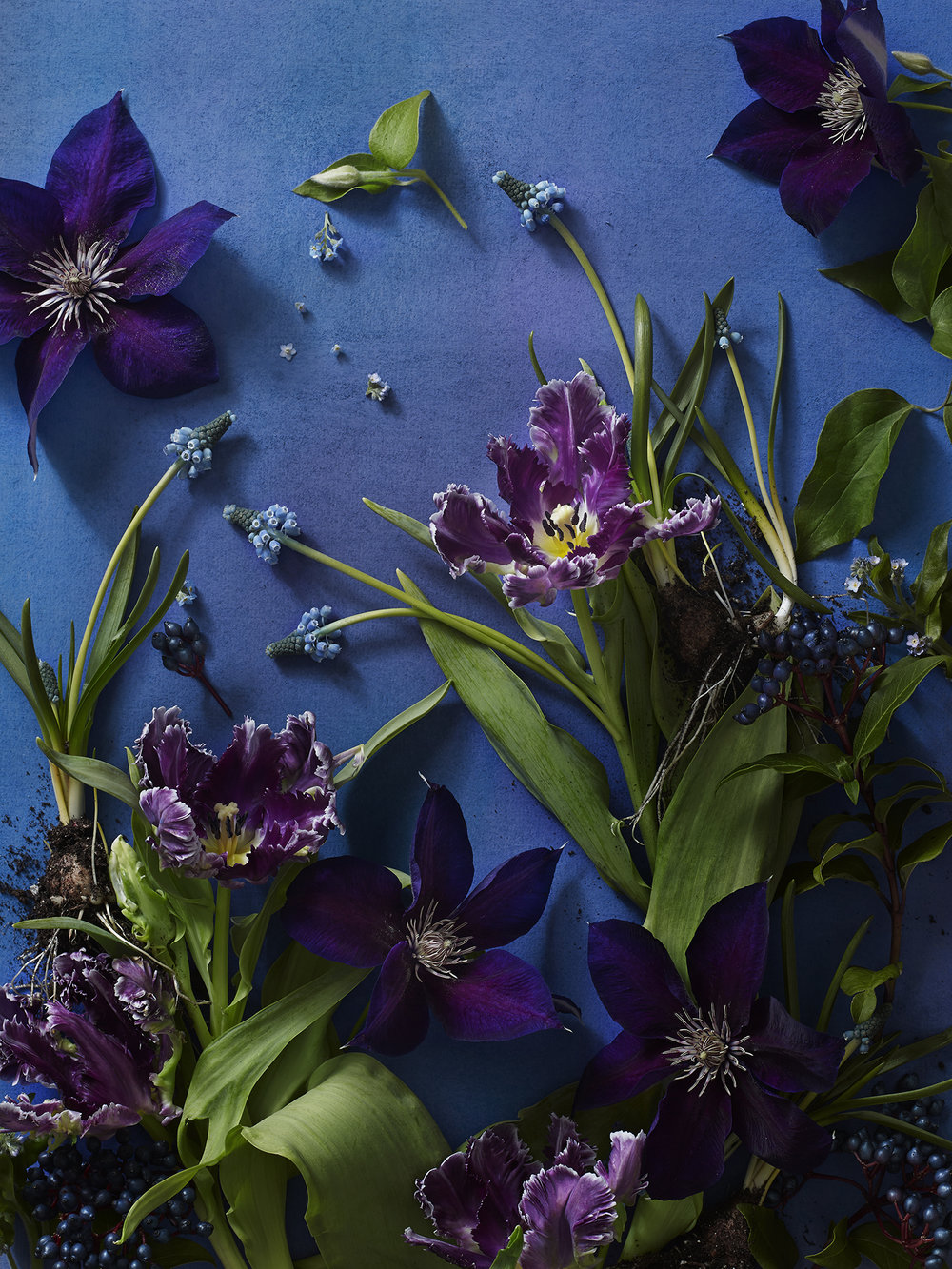 Spring_Blue.jpg