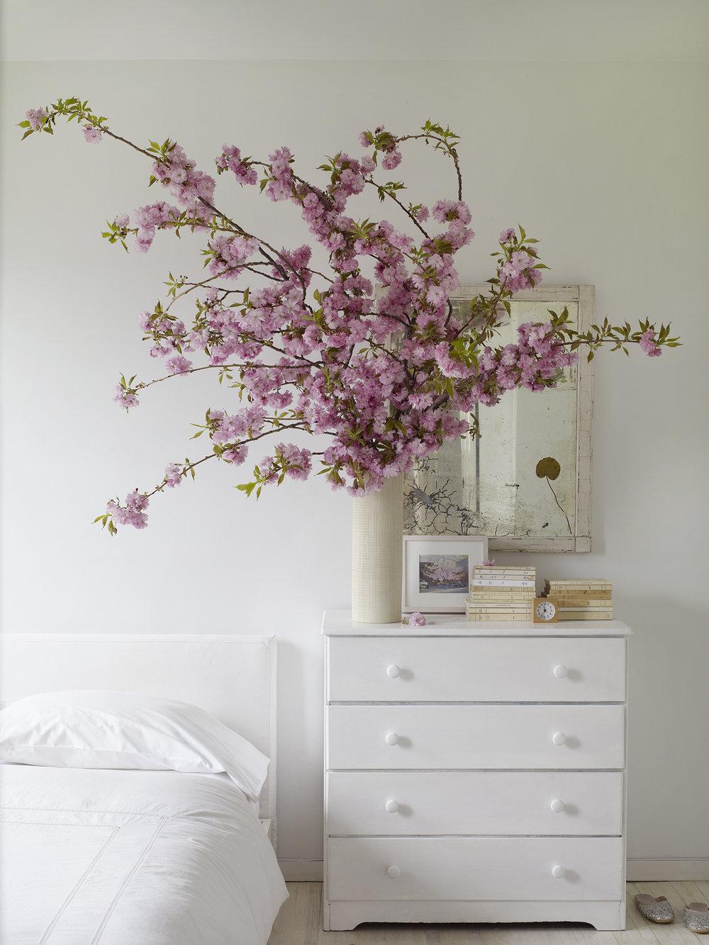 CherryBlossoms050.jpg