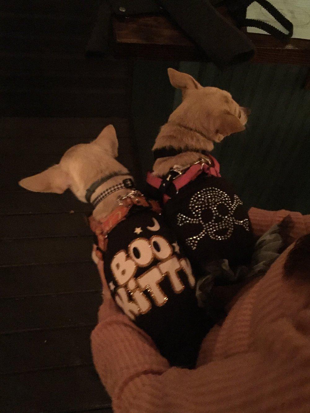 puppy_costume.jpg