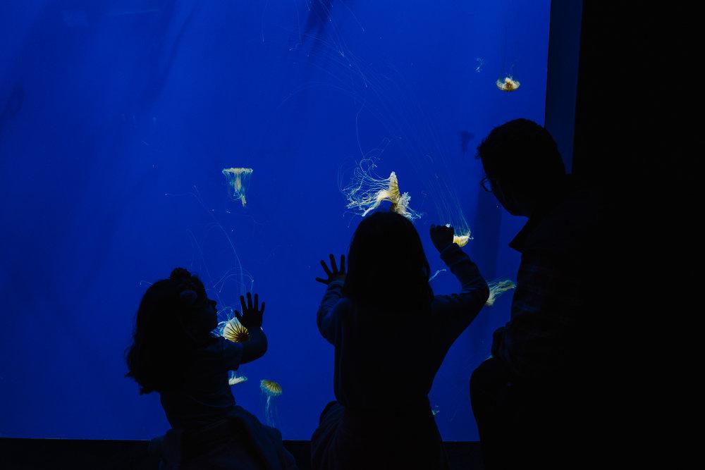 georgia aquarium tank roxannasuephotos