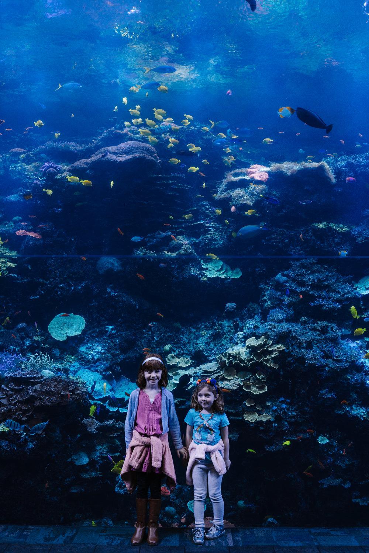 georgia aquarium fun things to do in Atlanta with kids roxannasuephotos