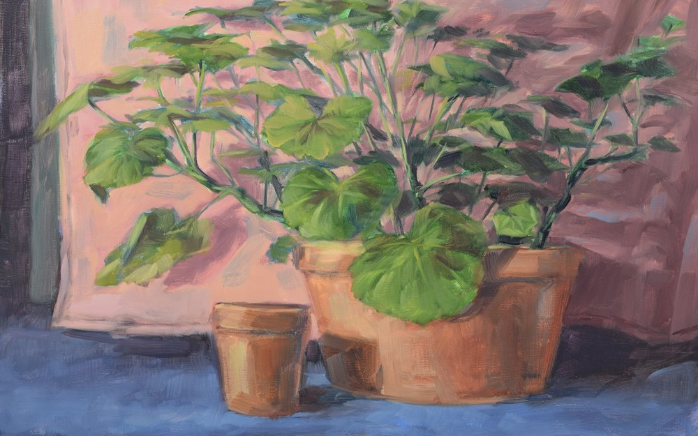 Geraniums (2017)